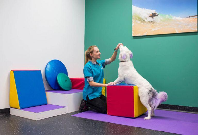 small animal specialist hospital sydney vetinary hospital fitout construction dog activity