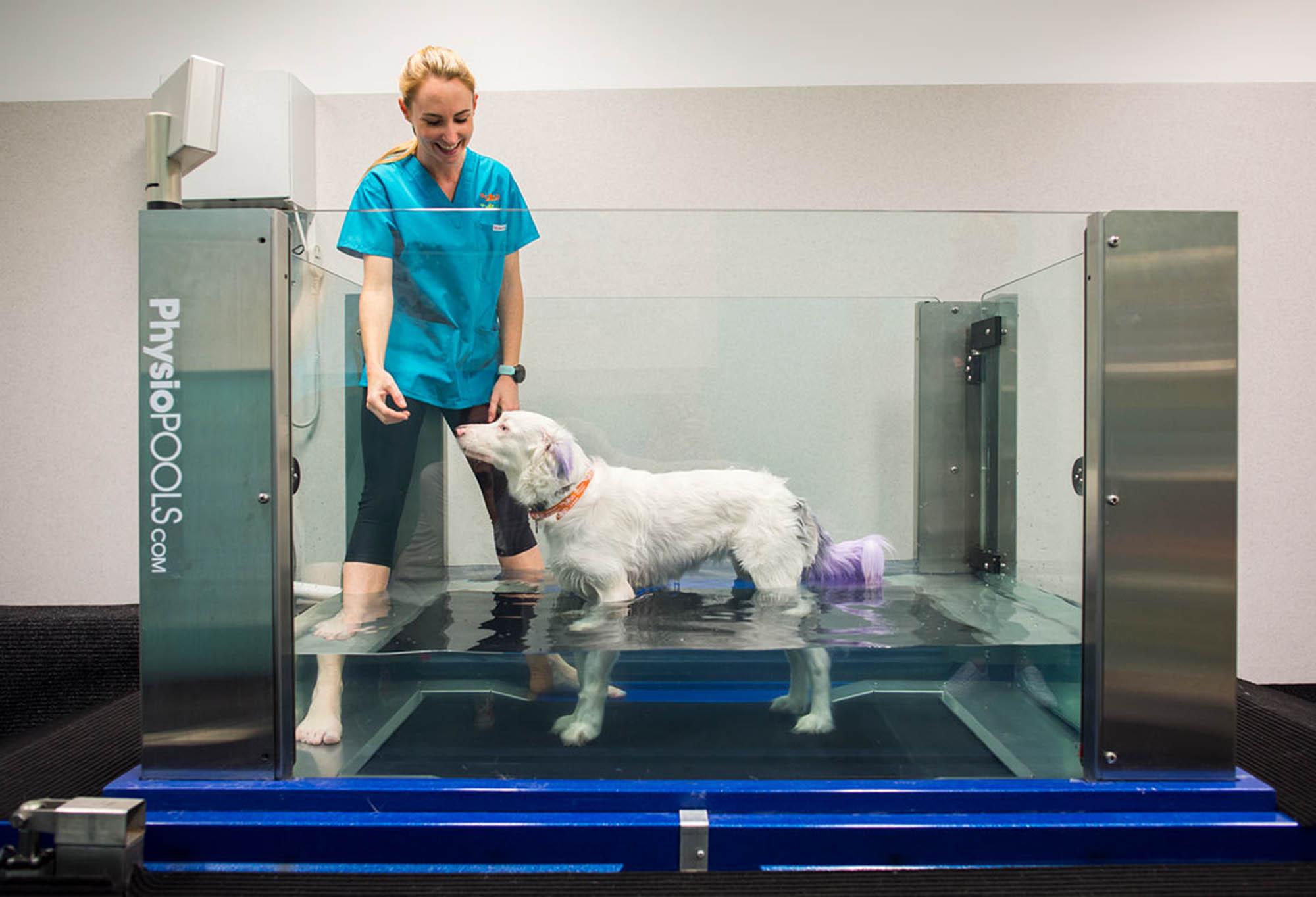 small animal specialist hospital sydney vetinary hospital fitout construction dog pool