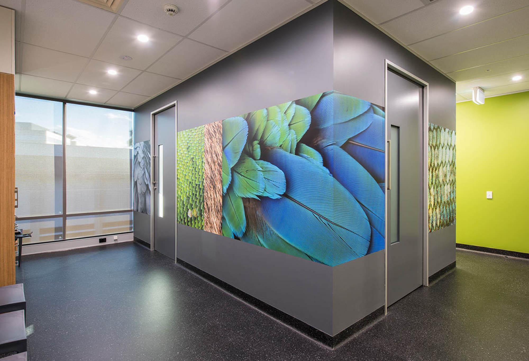 small animal specialist hospital sydney vetinary hospital fitout construction storage room